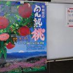 甲州市の完熟桃食べ歩きキャンペーンで桃を食べ比べ